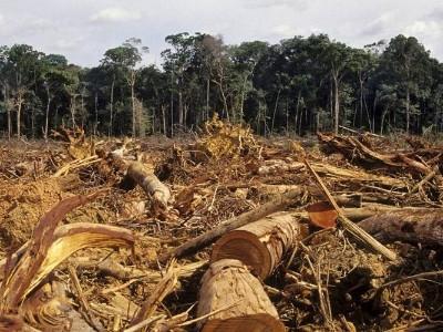 亚马逊森林大火