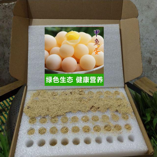44甲鱼蛋托